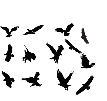 eagles collection silhouette - vector