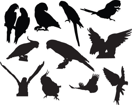 parrots collection - vector Vector