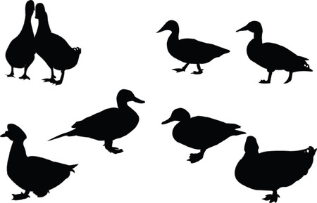 wild duck: ducks silhouette collection - vector