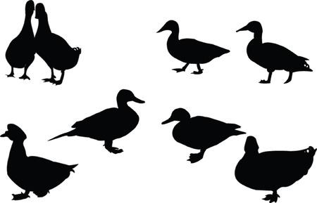 pato real: patos silueta colecci�n - vector