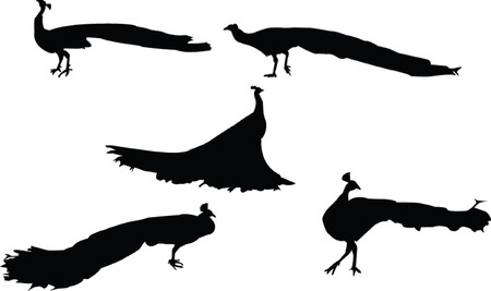 peafowl silhouettes - vector Vector