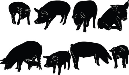 pig collection - vector