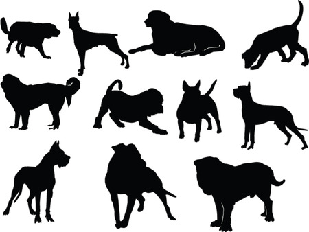 lapdog: dogs collection - vector Illustration