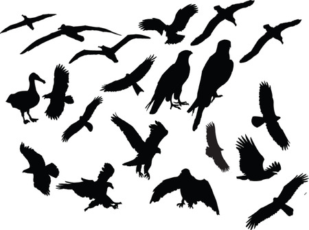 : birds collection silhouette - vector Vector