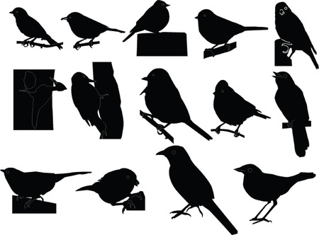 dicky birds collection - vector