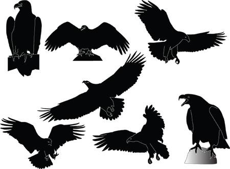 eagles collection - vector Stock Vector - 5264354