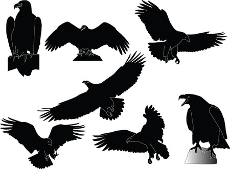 the air attack: eagles collection - vector Illustration