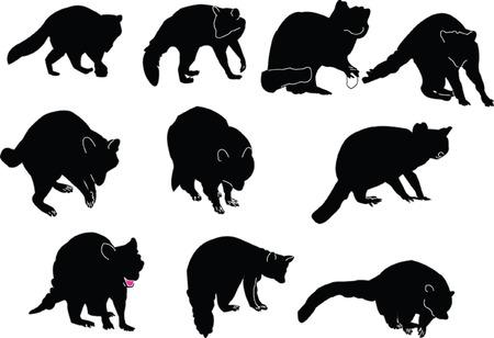 raccoons-collectie - vector