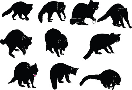 raccoons collection - vector Illustration