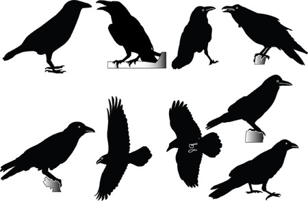 raven collection - vector