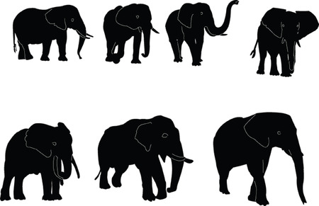 elephants collection Vector