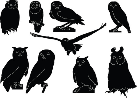 carnivores:  owls collection - vector