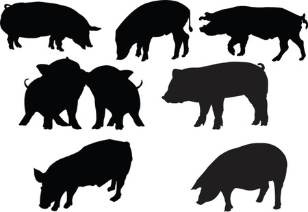 pigs collection silhouette Vector