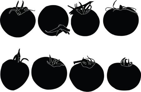 seasoned:  tomatoes collection Illustration