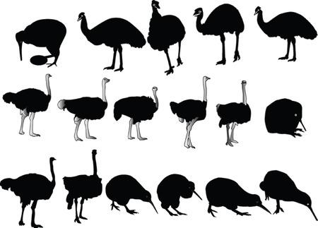 ignorancia: aves velocista collection - vector