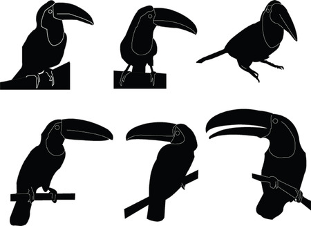 tucan:  tucans collection - vector Illustration