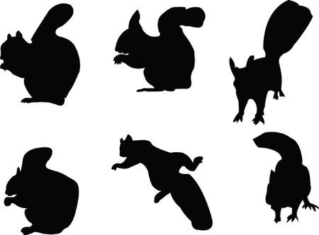 eekhoorns verzamelen - vector