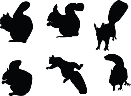 beg: squirrels collection - vector Illustration