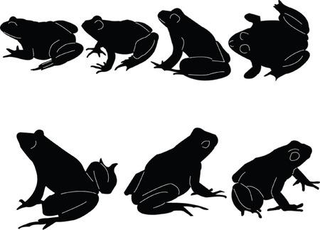 renacuajo: ranas collection - vector