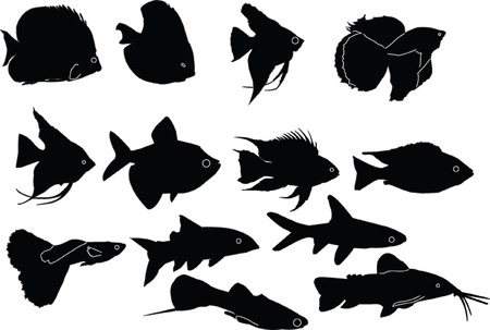 aquarium fish collection - vector Stock Vector - 5329524