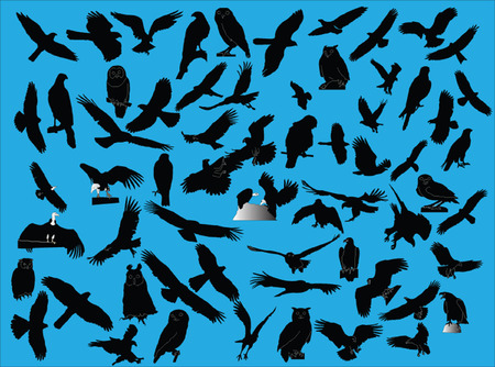 hawks collection -vector Stock Vector - 5329531