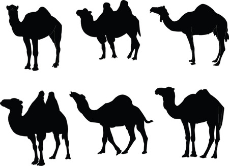 camello: camellos collection - vector