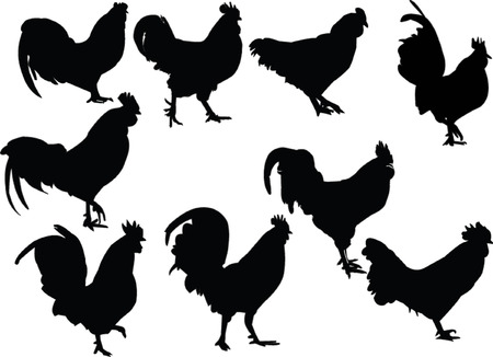 crowing: roosters collection - vector
