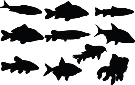 fishes collection - vector Vector