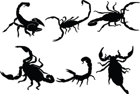 scorpions collection - vector Vector