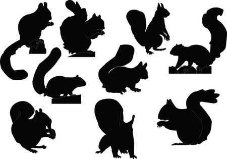 animal silhouette: squirrels collection - vector Illustration