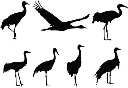 cranes collection - vector