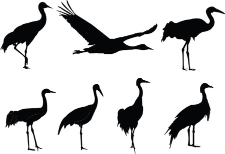 cranes collection - vector
