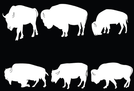 buffalo-bisons collection - vector Vector