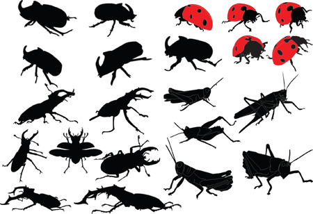 rear wing: insects collection - vector