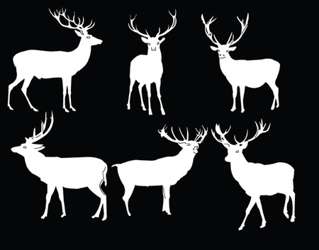 fawn: deers collection - vector