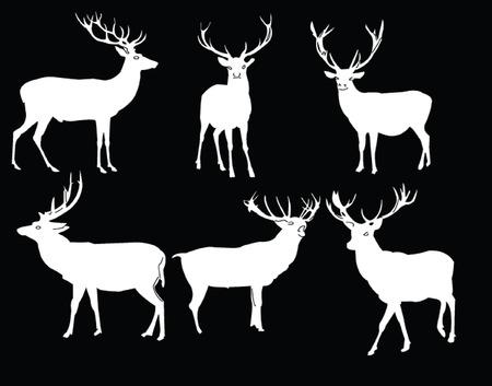 vertebrate: deers collection - vector