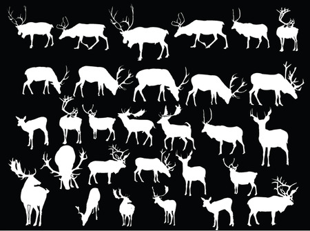 antelope: deers collection -vector