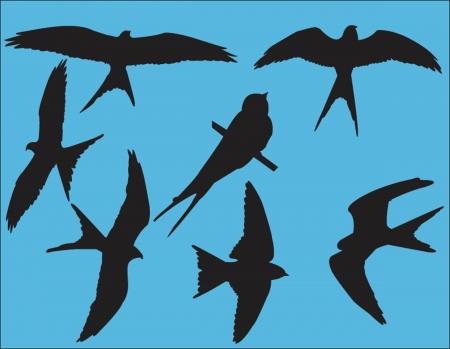 swallow bird: swallows collection - vector