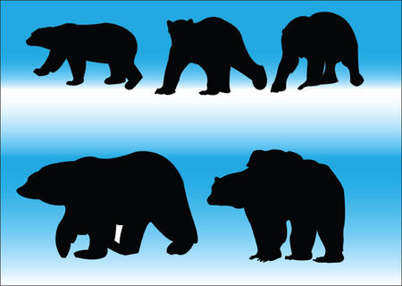 bears collection Vector