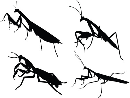 devotee bug silhouette Stock Vector - 5500090