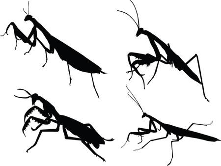 devotee bug silhouette Vector