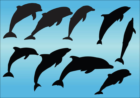 dolphins collection Vector