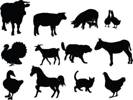 domestic animals illustration collection Illustration