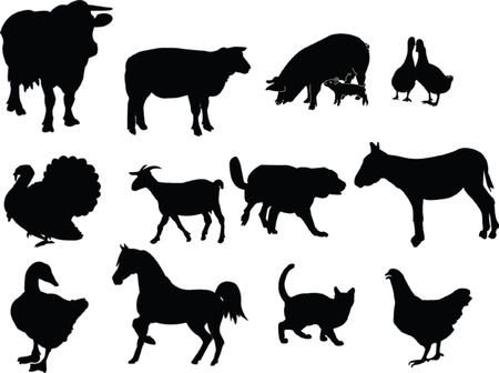 domestic animals illustration collection Vector