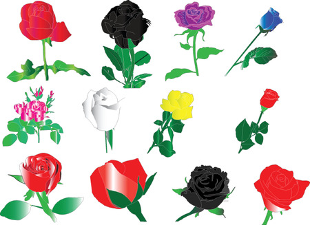 roses collection - vector Illustration