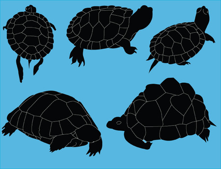 stylistic embellishments: turtles illustration collection - vector