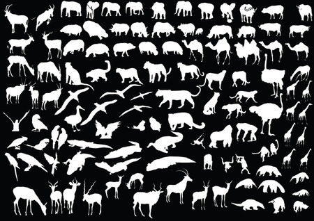 animals collection illustration - vector Vector