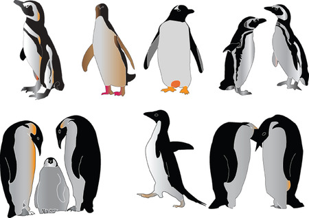 penguin collection  Stock Vector - 5727858