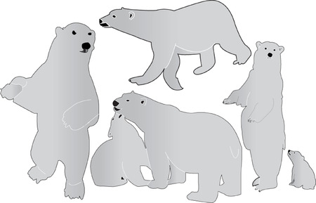 sea bears collection Vector