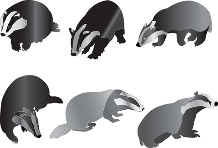 badgers collection